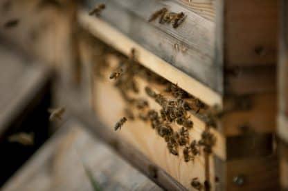 Bienen Polz Garten